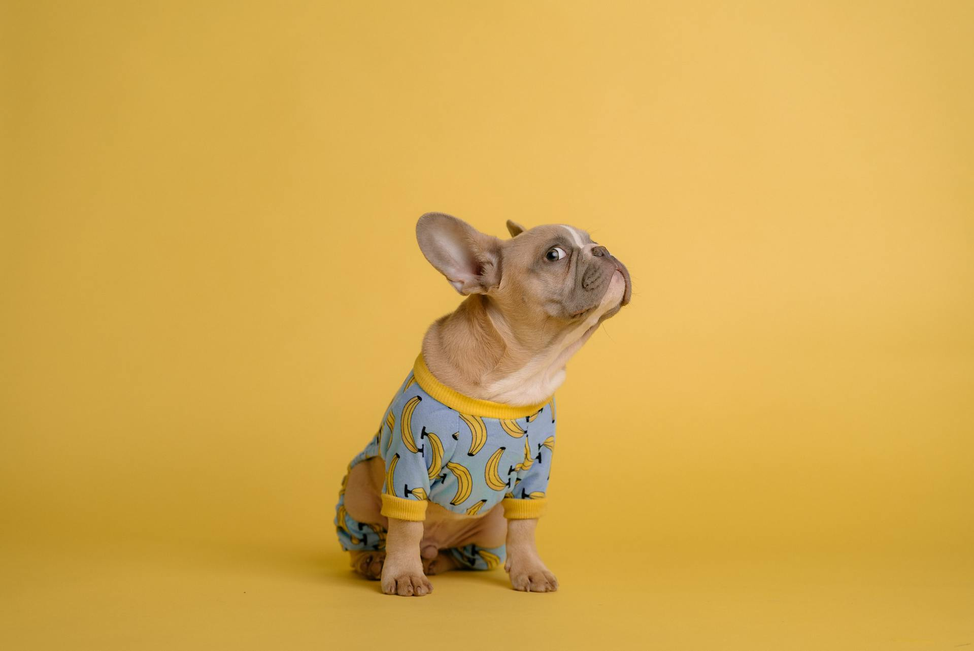Can Dogs eat bananas? The health benefits
